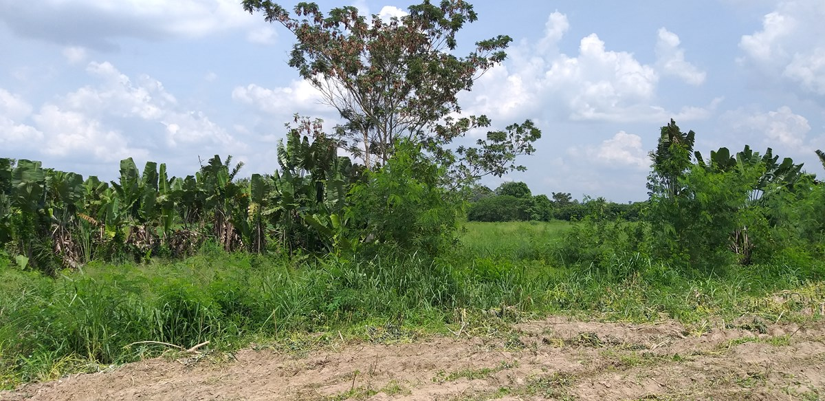 Land in NaJomtien, Bang Saray - Land - Na Jomtien -